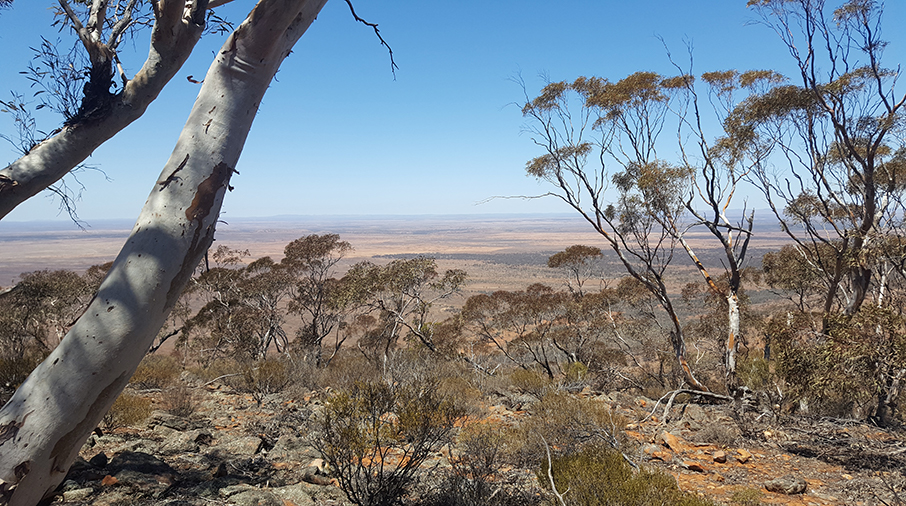 View out over the lower Flinders Ranges.